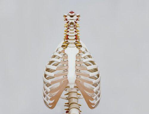 Psoas muskel – hvorfor er den vigtig?